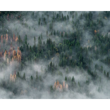 Pile of brown massage stones on wooden background - reprodukcja