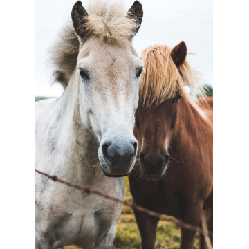 Bamboo forest - reprodukcja