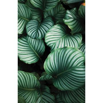 New York Taxi Number One - plakat